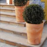 Gerbera 45 planter 45x54cm