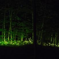 Foresta Lumina, experiencia multimedia en el bosque